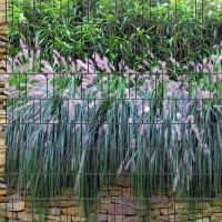 Graswand - Bedruckter Sichtschutz Streifen individueller Zaundruck